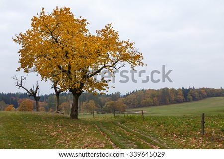 Majestic landscape with autumn leaves in forest. - stock photo