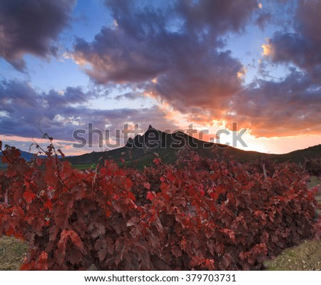 Majestic landscape with vineyards and mountains at sunset. - stock photo