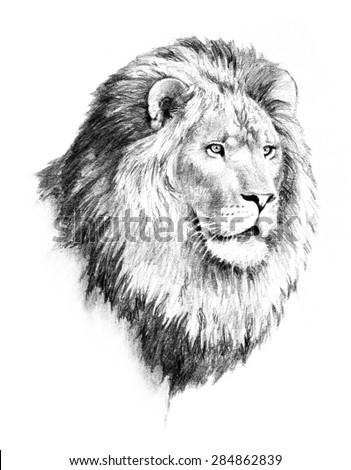majestic lion head with mane sketch illustration - stock photo