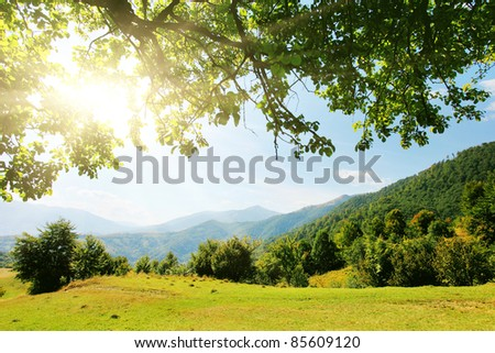 Majestic mountains landscape with fresh green leaves - stock photo