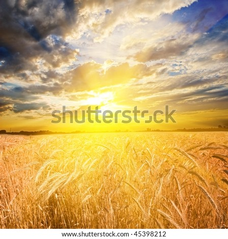 majestic sunset in a wheat field