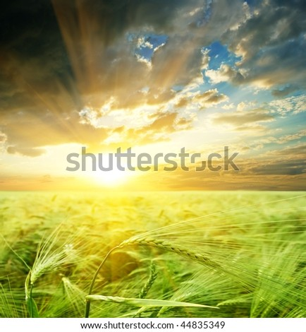 majestic sunset on a field - stock photo