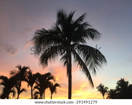 Majestic sunset with palm trees - stock photo