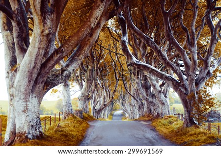 majestic tree alley with old trees - stock photo