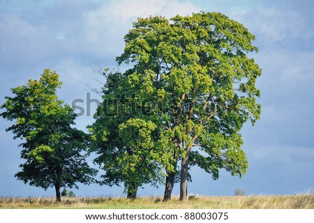 Majestic trees on the green summer glade - stock photo