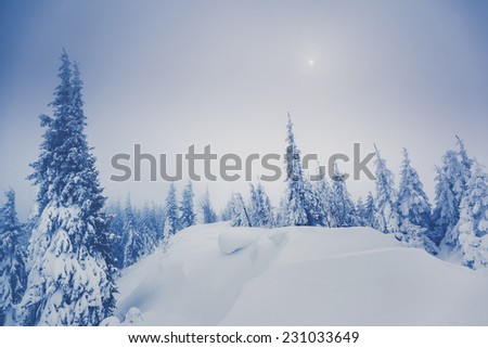 Majestic winter landscape glowing by sunlight. Dramatic wintry scene. Carpathian, Ukraine, Europe. Beauty world. Retro filter. Instagram toning effect. Happy New Year!