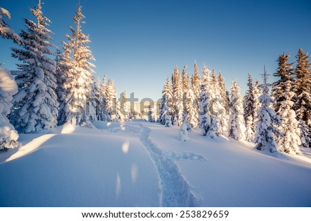 Majestic winter landscape glowing by sunlight. Dramatic wintry scene. Carpathian, Ukraine, Europe. Beauty world. Happy New Year! - stock photo