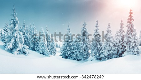 Majestic winter landscape glowing by sunlight in the morning. Dramatic wintry scene. Location Carpathian, Ukraine, Europe. Beauty world. Retro and vintage style, soft filter. Instagram toning effect. - stock photo