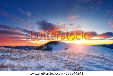 Majestic winter trees glowing by sunlight. Dramatic and picturesque morning wintry scene. Place location Carpathian national park, Ukraine, Europe. Beauty world. Warm toning effect. Happy New Year!