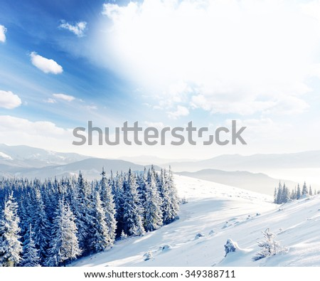 Majestic winter trees glowing by sunlight. Dramatic wintry scene. Location Carpathian national park, Ukraine, Europe. Alps ski resort. Beauty world. Instagram toning effect. Happy New Year! - stock photo