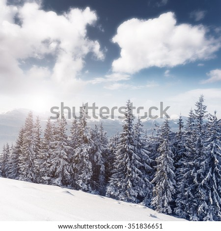 Majestic winter trees glowing by sunlight. Dramatic wintry scene. Location Carpathian national park, Ukraine, Europe. Alps ski resort. Beauty world. Instagram toning effect. Happy New Year!