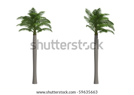 Majesty palm isolated on white background