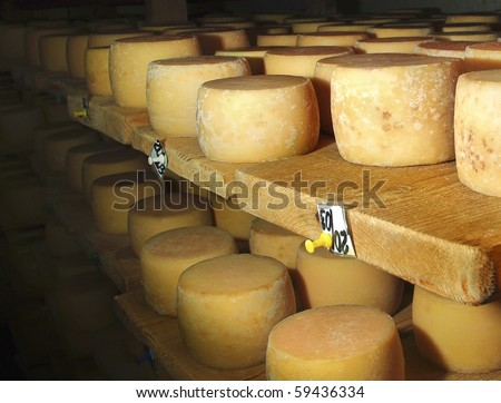 Making cheese at the farm on the old traditional Swiss technology. Ripening domestic cheese at the cheese dairy. - stock photo