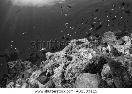 Maldives corals house for Fishes underwater landscape in black and white - stock photo