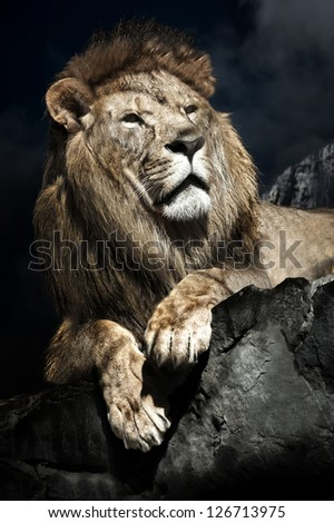 Male African Lion (Panthera leo) on top of a rock - stock photo