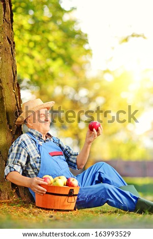 Male agricultural worker in overalls with basket of harvested apples sitting in orchard, and looking at apple