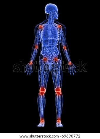 male anatomy - stock photo