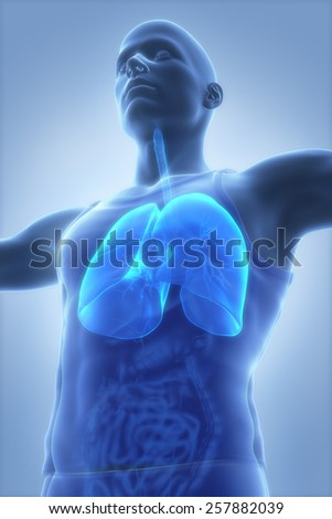 Male anatomy concept LUNGS - stock photo