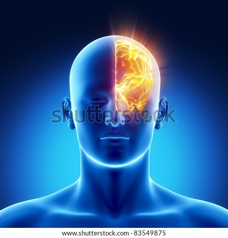 Male anatomy of human left hemisphere in x-ray view - stock photo