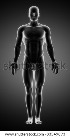 Male anatomy of human organs in x-ray view - stock photo