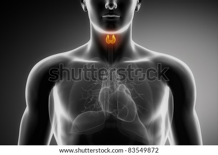 Male anatomy of human thyroid in x-ray view - stock photo