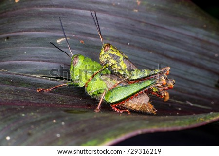 leaves and grasshopper relationship quiz