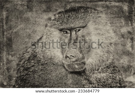 Male baboon on textured grunge background