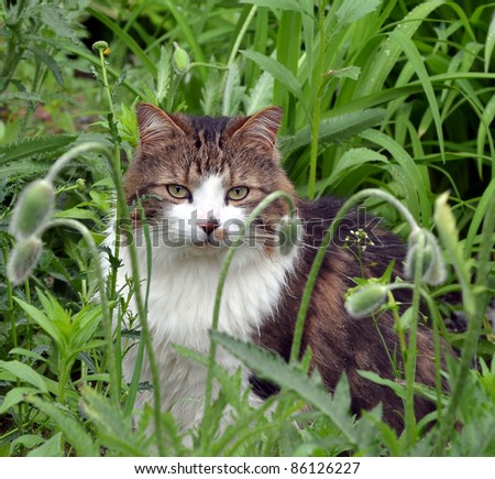 Male Calico cat sitting very still among tall flowers  and weeds thinking that he is invisible. - stock photo
