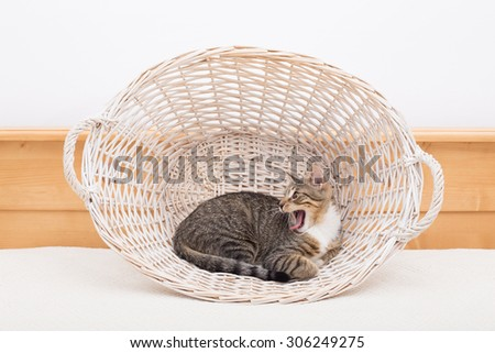 Male cat standing in a basket