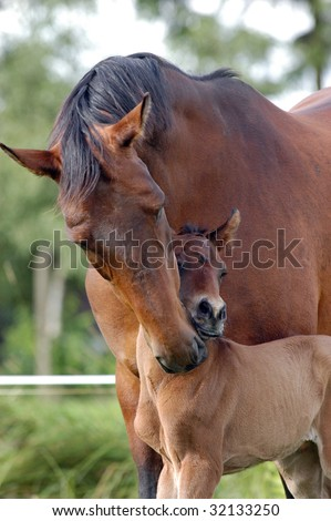 Male cleaning her foal - stock photo