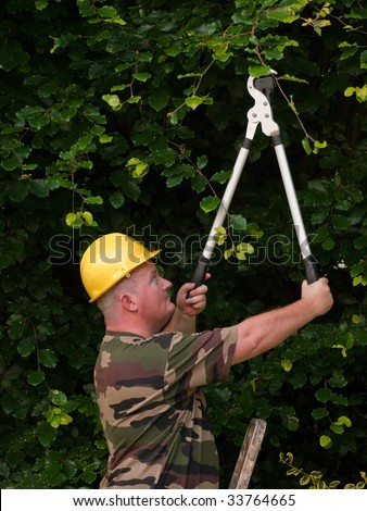 male cutting back tree branches and hedge in garden - stock photo