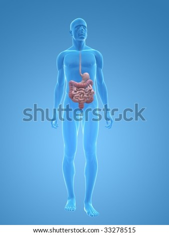 male digestive system - stock photo