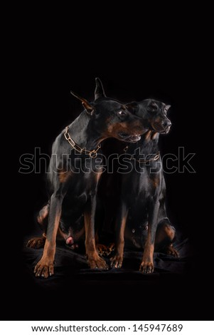 Male dog is apologies and wishes for forgiveness - stock photo