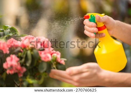 Male florist spraying flowers in flower shop. - stock photo