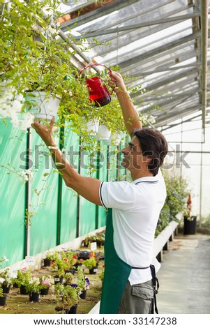 male florist watering plants in flower shop - stock photo