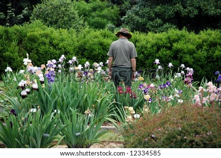 Male gardener standing among numerous iris blooms - stock photo