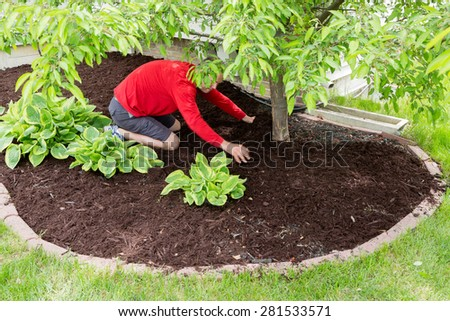 Male gardener working in the garden doing the mulching at the start of spring kneeling in a flowerbed spreading the mulch around a tree trunk - stock photo