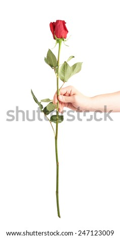 Male hand holding a single red rose isolated over the white background - stock photo