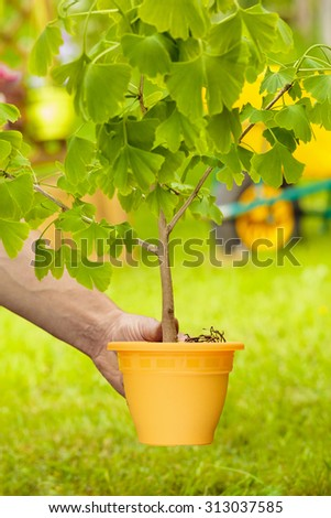 Male Hand Holding Small Tree with orange vase on green and wheelbarrow background - stock photo