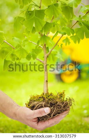 Male Hand Holding Small Tree with roots on green and wheelbarrow background - stock photo