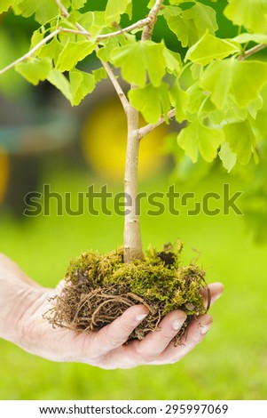 Male Hand Holding Small Tree with roots on green background - stock photo