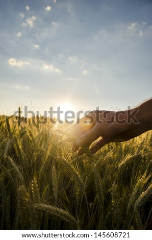 Male hand over wheat field. Concept of care for our planet. - stock photo