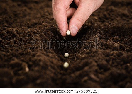 Male hand seeding for planting - stock photo
