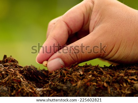 Male hand seeding for planting over green environment background - stock photo