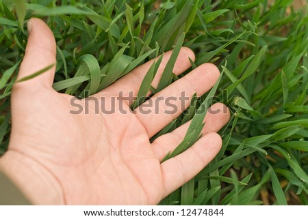 Male hand touching the fresh green grass