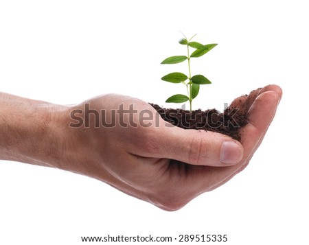 Male hand with a green sprout on white background