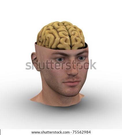 Male head showing brain inside. - stock photo