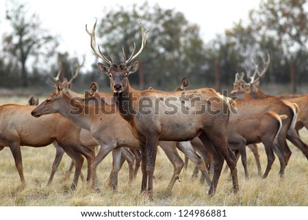 male is deer with beautiful horns looks into the camera - stock photo