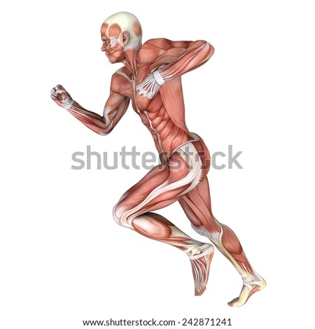 male lay figure - stock photo