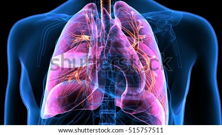 Real Lungs Stock Images, Royalty-Free Images & Vectors ...